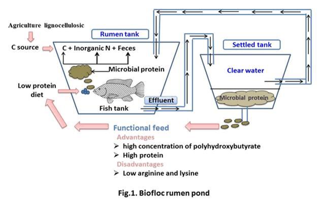 How biofloc system works